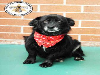 Adopt A Pet :: RIPPLE  - Wilmington, NC