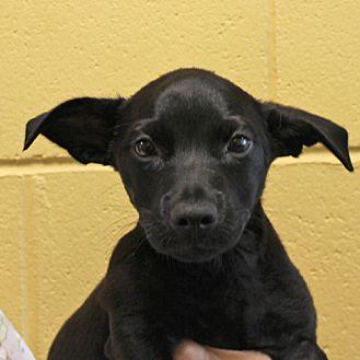 ARF   Dogs   I'm Aquafina, Adopt Me!