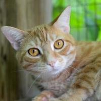 Adopt A Pet :: Starburst - New Freedom, PA