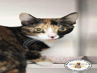 Adopt A Pet :: DOTTIE  - Wilmington, NC