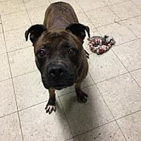 Adopt A Pet :: Sampson- Ohio - Fulton, MO