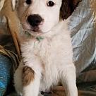 Adopt A Pet :: Fritz