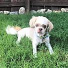 Adopt A Pet :: JASMINE