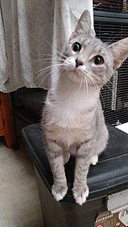 Adopt A Pet :: Katniss  - Fischer, TX