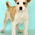 Adopt A Pet :: Zaran