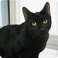Adopt A Pet :: Hugo - Huntington, NY