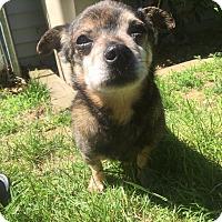 Adopt A Pet :: Harvey - Newtown, CT
