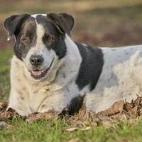 Adopt A Pet :: Polly - Ravenel, SC