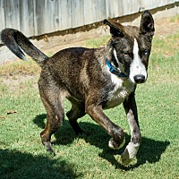 Adopt A Pet :: Eric - Loma Linda, CA