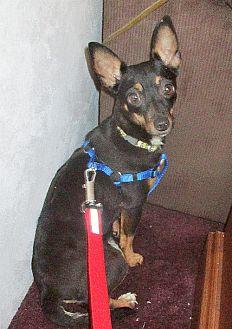 Adopt A Pet :: Beverly  - Camden, SC