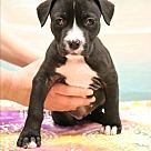 Adopt A Pet :: Angelica (Jelly)
