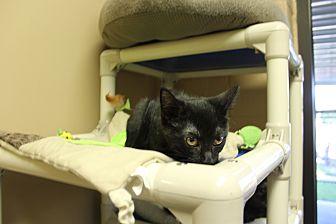 Adopt A Pet :: Lizzy  - Germantown, TN
