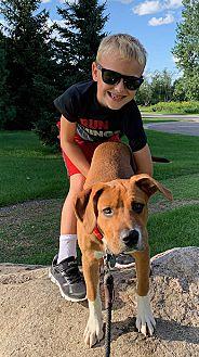 Adopt A Pet :: Rolly  - Saint Paul, MN