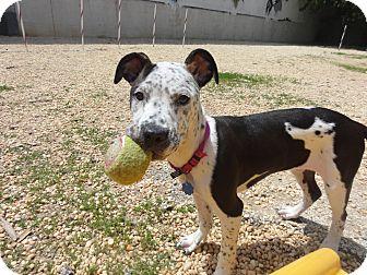 Philadelpiha Dog Adoption