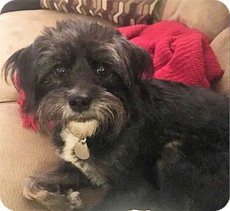Terrier (Unknown Type, Small) Mix Dog for adoption in Huntsville, Alabama - Lucy