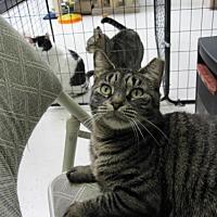 Adopt A Pet :: Baby Cat - Smithtown, NY