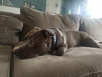 Terrier (Unknown Type, Medium) Dog for adoption in Philadelphia, Pennsylvania - Tony