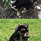 Adopt A Pet :: Jade's Rocky