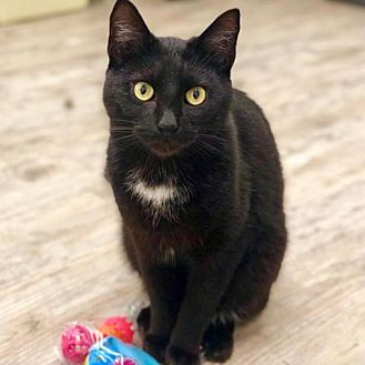 Adopt A Pet :: Thrush  - Lucedale, MS