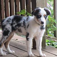 Adopt A Pet :: Mike - Minneapolis, MN