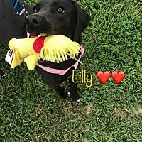 Adopt A Pet :: Lilypad - Rockville, MD