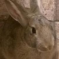 Adopt A Pet :: Frankie - Idaho Falls, ID