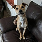Adopt A Pet :: McGrady
