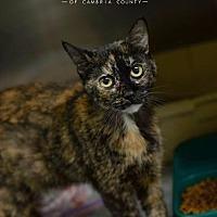 Adopt A Pet :: Tiger - Johnstown, PA