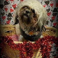 Adopt A Pet :: Toby *Special Needs* - Detroit, MI