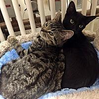 Adopt A Pet :: Hank - Santa Fe, NM