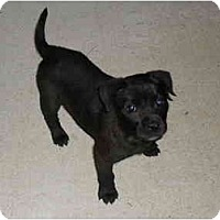 Adopt A Pet :: Rucy - Houston, TX