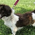 Adopt A Pet :: Perle