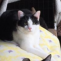 Adopt A Pet :: Clyde - Long Beach, CA