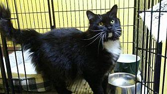 Adopt A Pet :: Mamacita  - Mt Vernon, IN