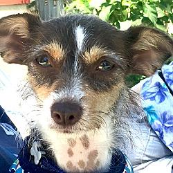 Lucky Dog Rescue | Adoptable Dogs: Adopt a Dog Today!