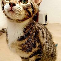 Adopt A Pet :: Pluto - Huntsville, AL