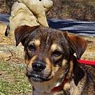 Adopt A Pet :: Bailey B loves kids