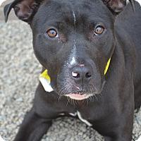 Adopt A Pet :: Zula - Toledo, OH