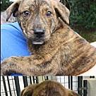 Adopt A Pet :: Ping