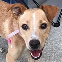 Adopt A Pet :: Linda *Adoption Pending* - Fairfax, VA