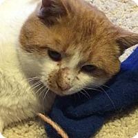Adopt A Pet :: Bob - Ogallala, NE