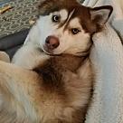 Adopt A Pet :: Arielle