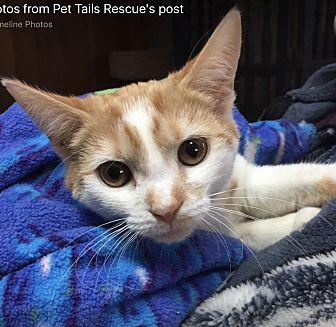 Adopt A Pet :: Hazel  - Northwood, NH