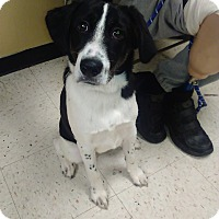 Adopt A Pet :: Snoopy - Kendall, NY