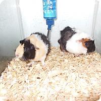 Adopt A Pet :: Mables boys - Olivet, MI