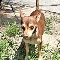 Adopt A Pet :: Ginger - Tavares, FL