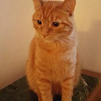 Adopt A Pet :: Mr. Oliver - Montreal, QC