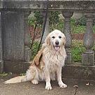 Adopt A Pet :: John Adams