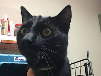 Adopt A Pet :: Barton  - Edmonton, AB