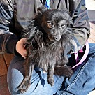 Adopt A Pet :: Grady *Adoption Pending*